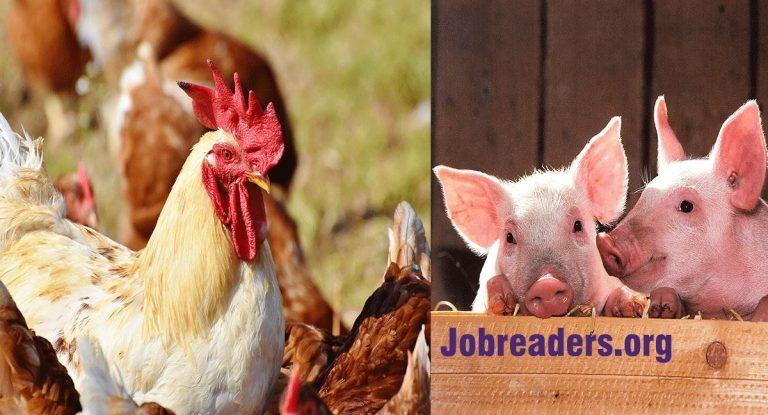 Proven Secrets for Lucrative Livestock Farming Business (Startup)