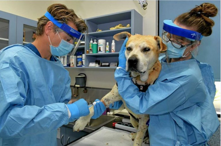Easiest Veterinary schools to get in USA | Cost, Requirement and Tuition Fee